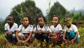 TOPSHOT-DOUNIAMAG-ETHIOPIA-CLIMATE-TREES